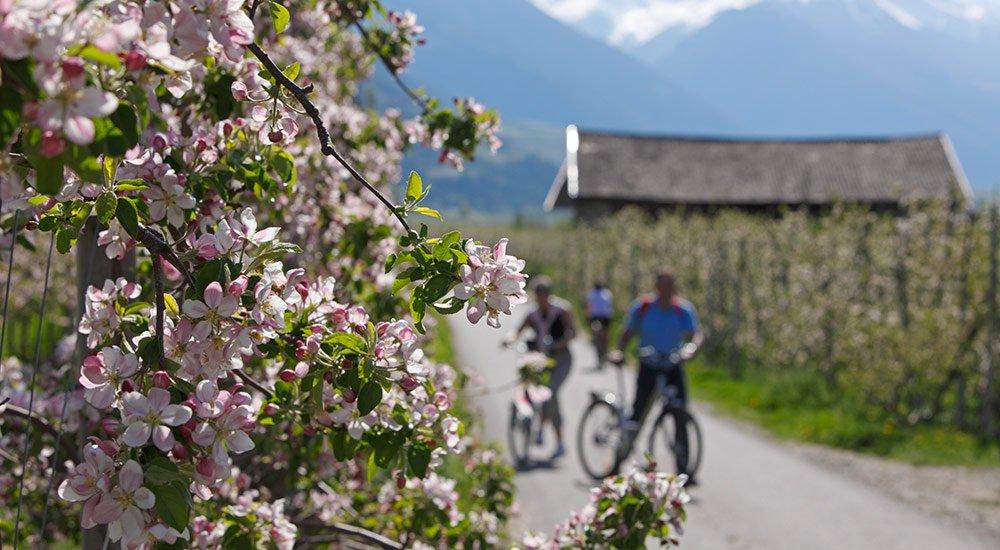 Vacanze nelle dolomiti-giro in bicicletta